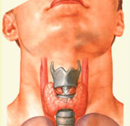 thyroid1