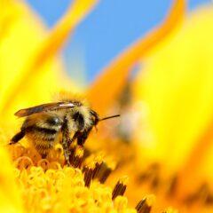 Q&A για τα προϊόντα της μέλισσας